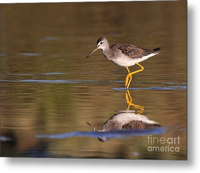 Greater Yellow Legs Metal Print by Ruth Jolly