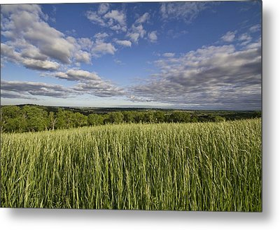 Metal Print featuring the photograph Green And Blue by Daniel Sheldon