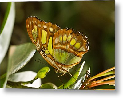 Green And Brown Tropical Butterfly Metal Print