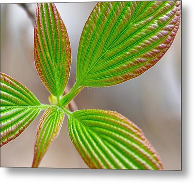 Green And Red Leaves Metal Print