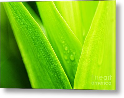 Green And Wet Metal Print by Thomas R Fletcher