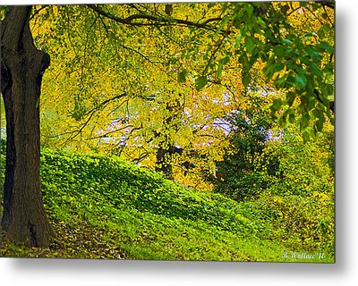 Green And Yellow Metal Print by Brian Wallace
