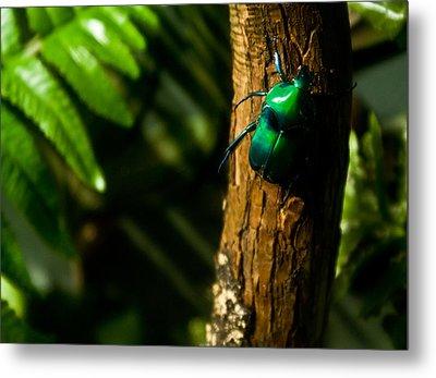 Green Beetle Metal Print by Douglas Barnett