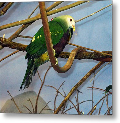Green Bird Metal Print by Larry Stolle