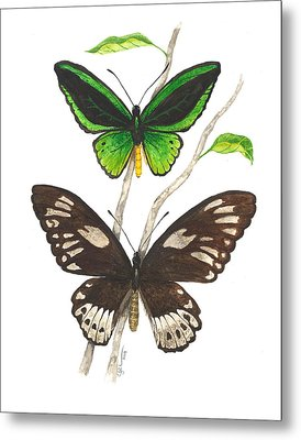 Green Birdwing Butterfly Metal Print by Cindy Hitchcock