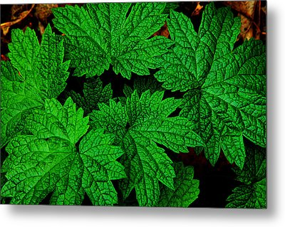 Green Burst Metal Print by James Hammen