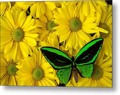 Green Butterfly Resting Metal Print by Garry Gay