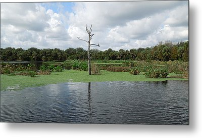 Metal Print featuring the photograph Green Cay Panorama by Ron Davidson
