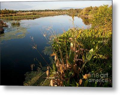 Green Cay Wetlands, Fl Metal Print by Mark Newman