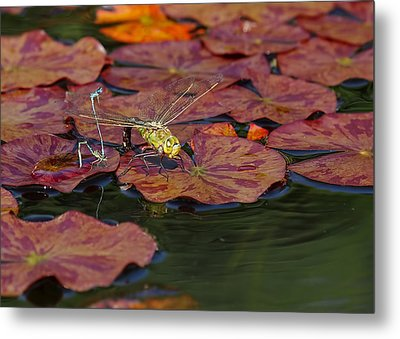 Green Darner Dragonfly With Friends Metal Print