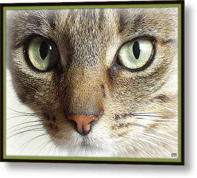 Green Eyed Cat Face Metal Print by Heidi Manly