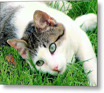 Metal Print featuring the photograph Green Eyed Cat by Janette Boyd