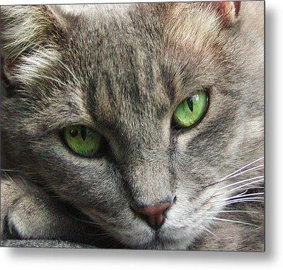 Green Eyes Metal Print by Leigh Anne Meeks
