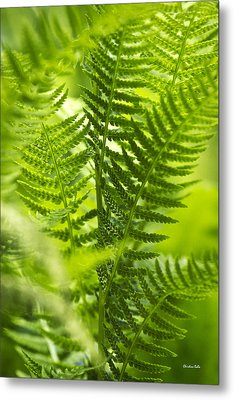 Green Fern Art Metal Print by Christina Rollo