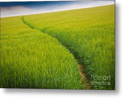 Green Field Metal Print by Michael Hudson