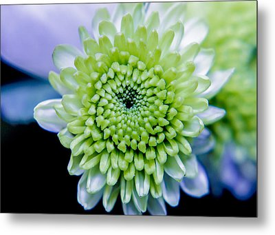 Green Flower Metal Print by Amr Miqdadi