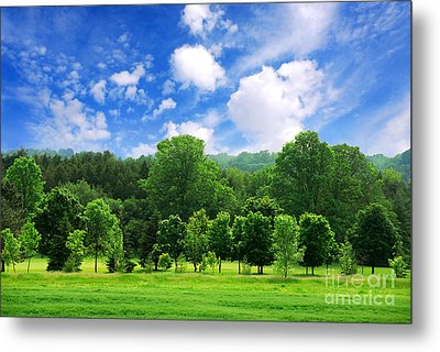 Green Forest Metal Print by Elena Elisseeva