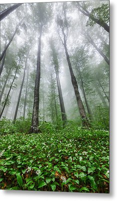 Green Giants Metal Print by Evgeni Dinev