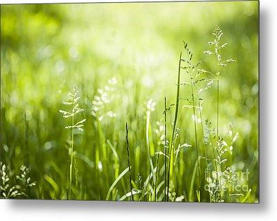 Green Grass Flowering Metal Print