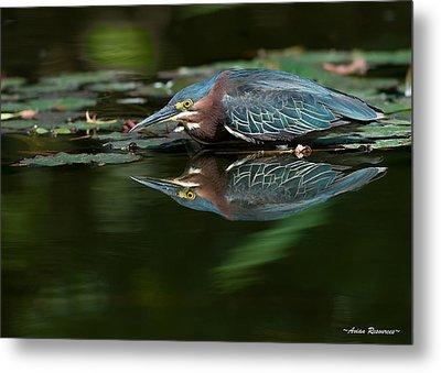 Metal Print featuring the photograph Green Heron Reflection 2 by Avian Resources