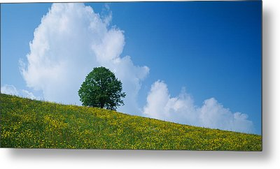 Green Hill W Flowers & Tree Canton Zug Metal Print by Panoramic Images