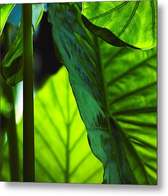 Green Leaf Trilogy I Metal Print by Silke Brubaker