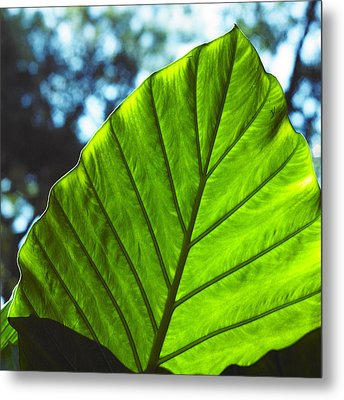 Green Leaf Trilogy II Metal Print by Silke Brubaker