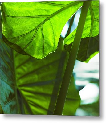 Green Leaf Trilogy IIi Metal Print by Silke Brubaker