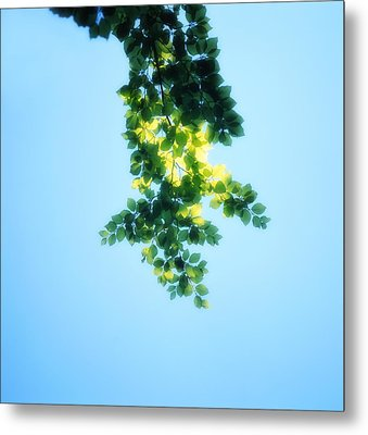 Green Leaves In The Sunshine - Soft - Available For Licensing Metal Print by Ulrich Kunst And Bettina Scheidulin