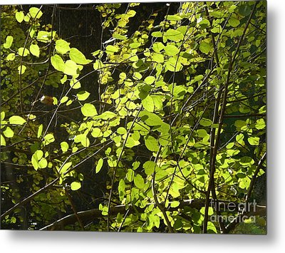 Green Leaves Metal Print