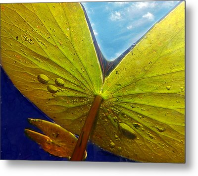 Green Lilly Pad Metal Print