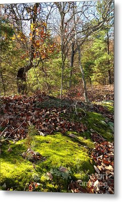 Green Moss By The Road Metal Print by Janet Felts