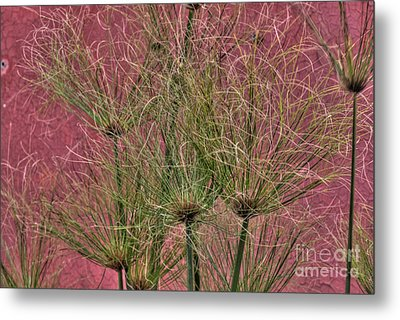 Green On Pink Metal Print by Deborah Smolinske