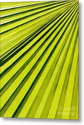 Green Palm Frond Metal Print by Phil Perkins