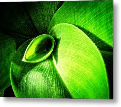 Green Paradise - Leaves By Sharon Cummings Metal Print
