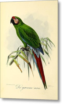 Green Parrot Metal Print by Rob Dreyer