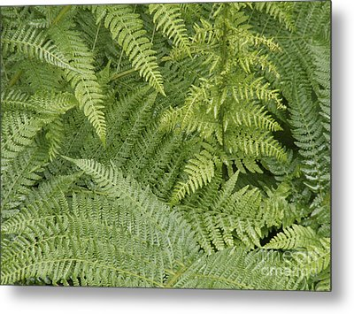 Green Peace 2 Metal Print by Sandy Molinaro