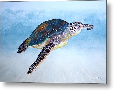 Green Sea Turtle II Metal Print by Jeff Lucas