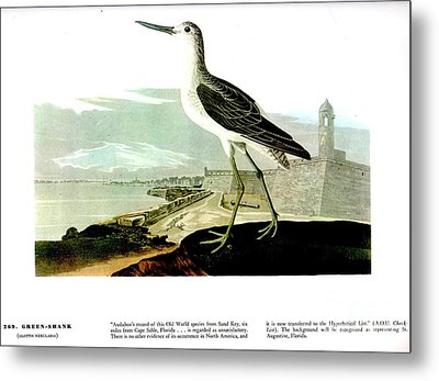 Green Shank Metal Print by Celestial Images