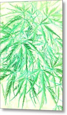 Metal Print featuring the photograph Green Splender by Jamie Lynn