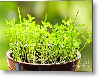 Green Spring Seedlings Metal Print by Elena Elisseeva