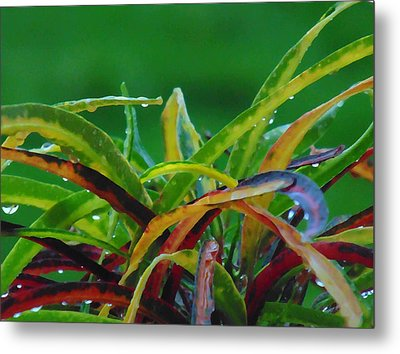 Green Thing Metal Print by Marcello Cicchini