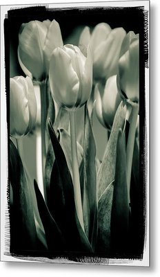 Green Toned Tulip Metal Print