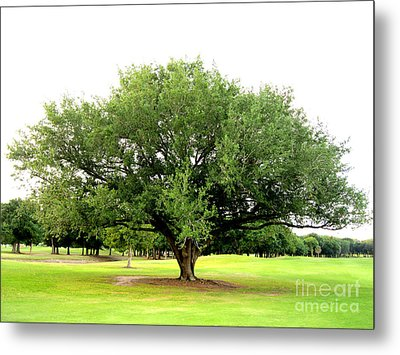Metal Print featuring the photograph Green Tree by Oksana Semenchenko