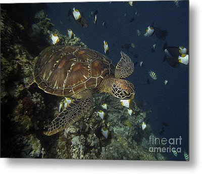 Metal Print featuring the photograph Hawksbill Turtle by Sergey Lukashin