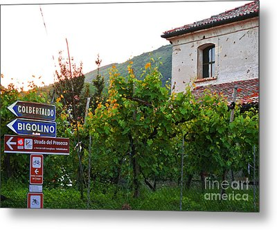 Green Vineyards Metal Print by Sarah Christian