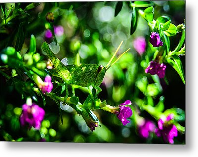Green Visitor In The False Heather Metal Print by Brian Xavier