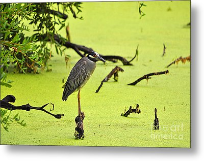 Green Yellow And Red Metal Print by Al Powell Photography USA