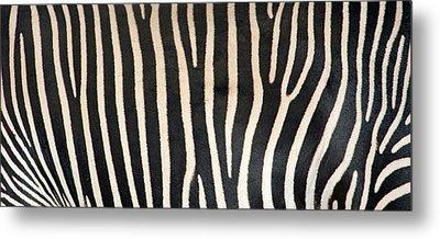 Greveys Zebra Stripes Metal Print