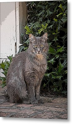 Grey Cat Metal Print